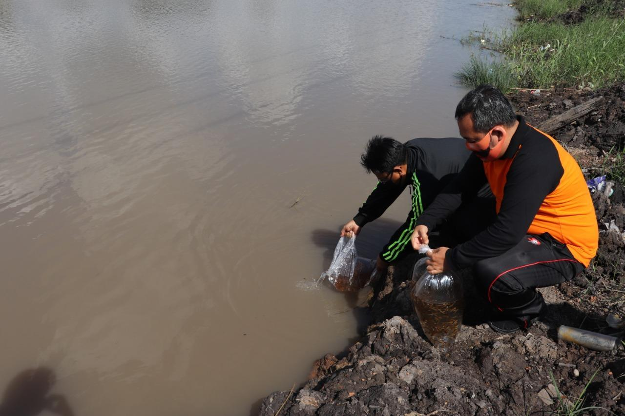 5.000 Anak Ikan Gabus Dilepas di 'Taman Mandara'