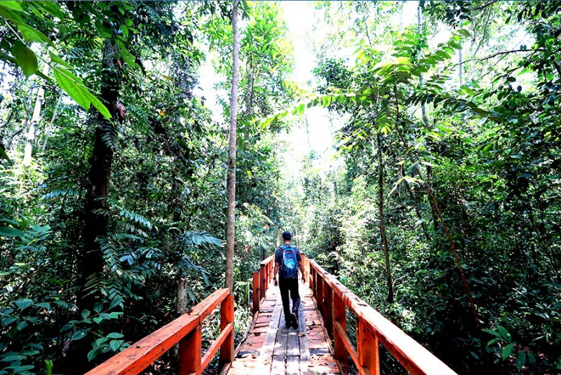 AMAZING! Hutan Pelawan Seharusnya Mendunia
