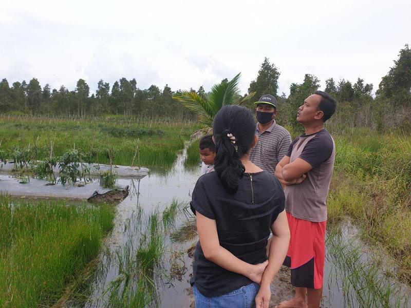 Diberitahu Warga, Yuk Rina Tinjau Kebun Cabai yang Terendam Banjir
