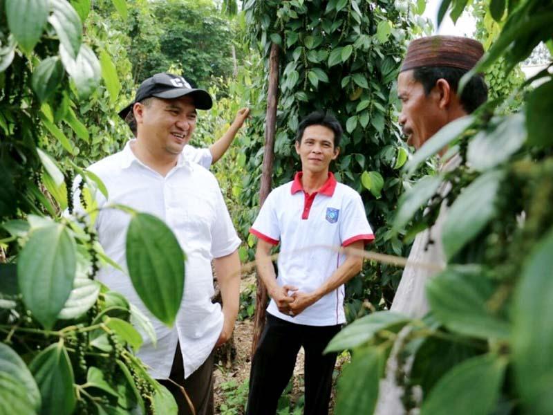 Harga Lada dan Sawit Naik, Ekonomi Petani Bangka Belitung Semakin Baik