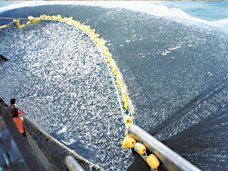Keberadaan Alat Tangkap Trawl Perlu Perda Zonasi
