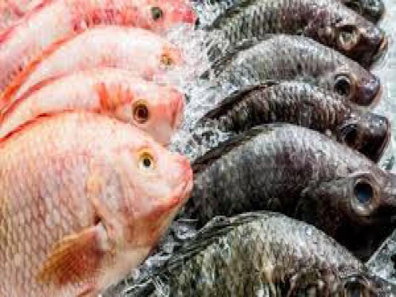 Komoditas Ikan Masih Picu Inflasi Juni 2019