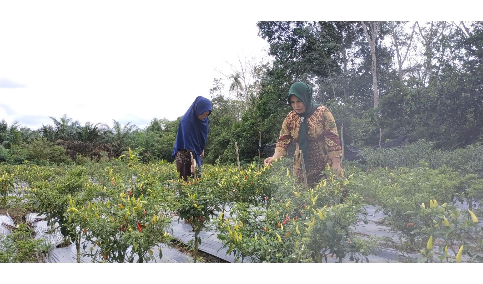 KWT Desa Saing Kembangkan Konsep KRPL