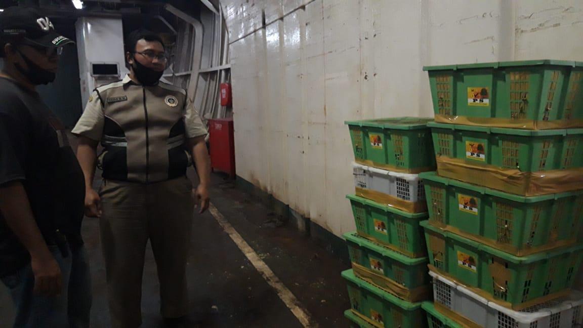 Lagi, Karantina Pertanian Pangkalpinang Gagalkan Rencana Penyelundupan 430 Burung ke Jakarta