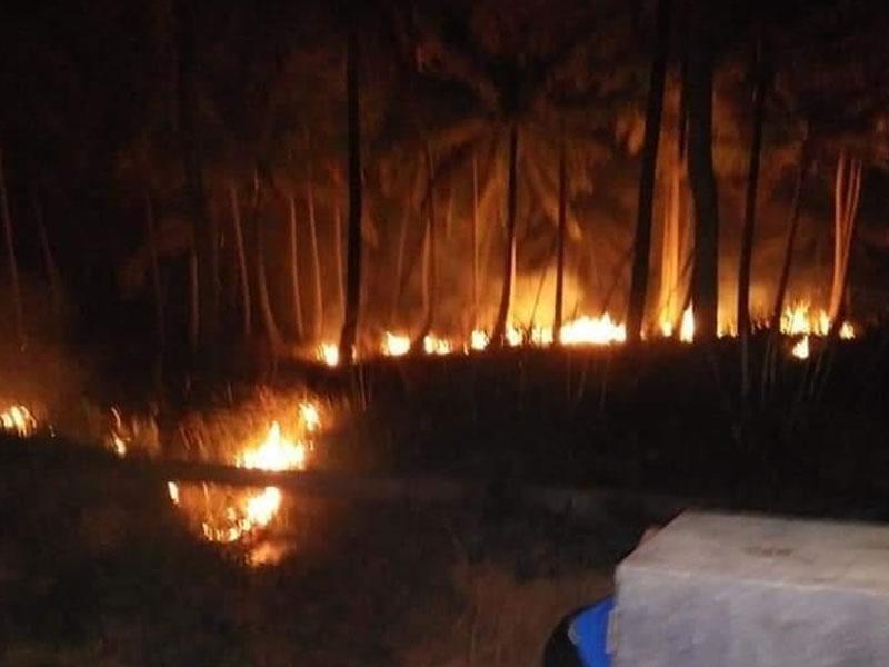 Lahan di Dusun Pal 4 Penyak Ludes Terbakar