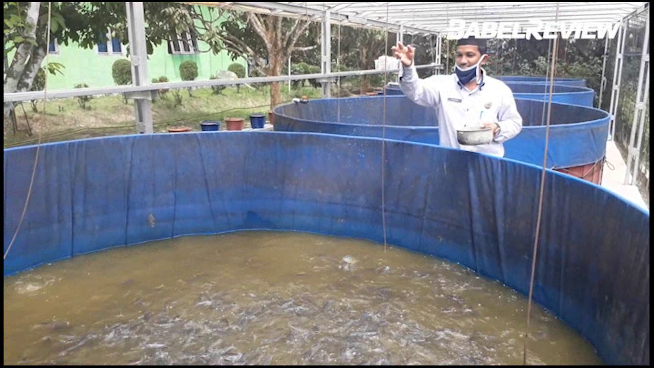 VIDEO: Pemdes Simpang Katis Kembangkan Potensi Desa Sektor Budidaya Ikan Air Tawar