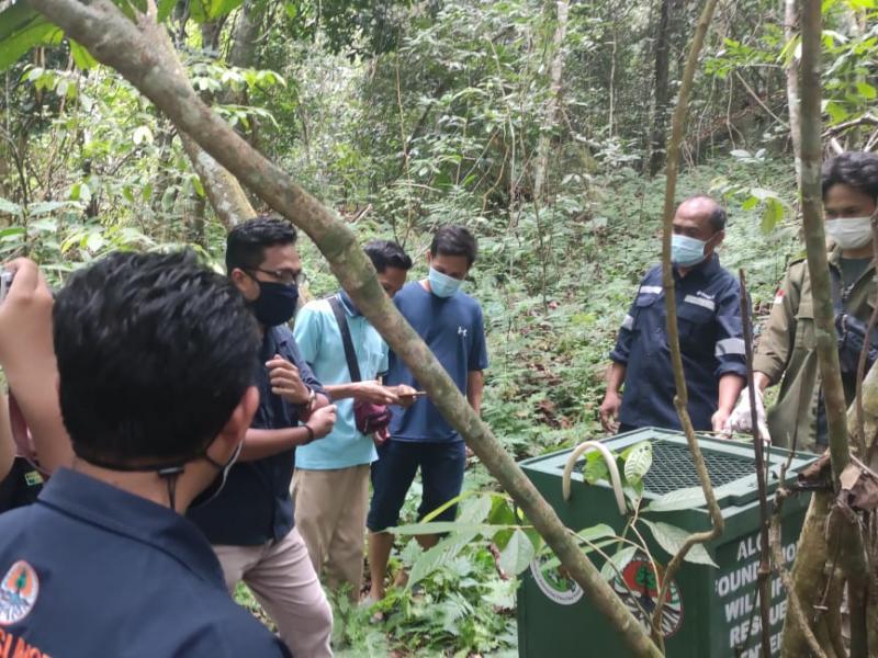 Alobi Foundation bersama BKSDA Sumsel melakukan pelepasan liar enam satwa liar ke habitanya di hutan konservasi Kepulauan Bangka Belitung, Selasa (5/4/2021). (dok Alobi)