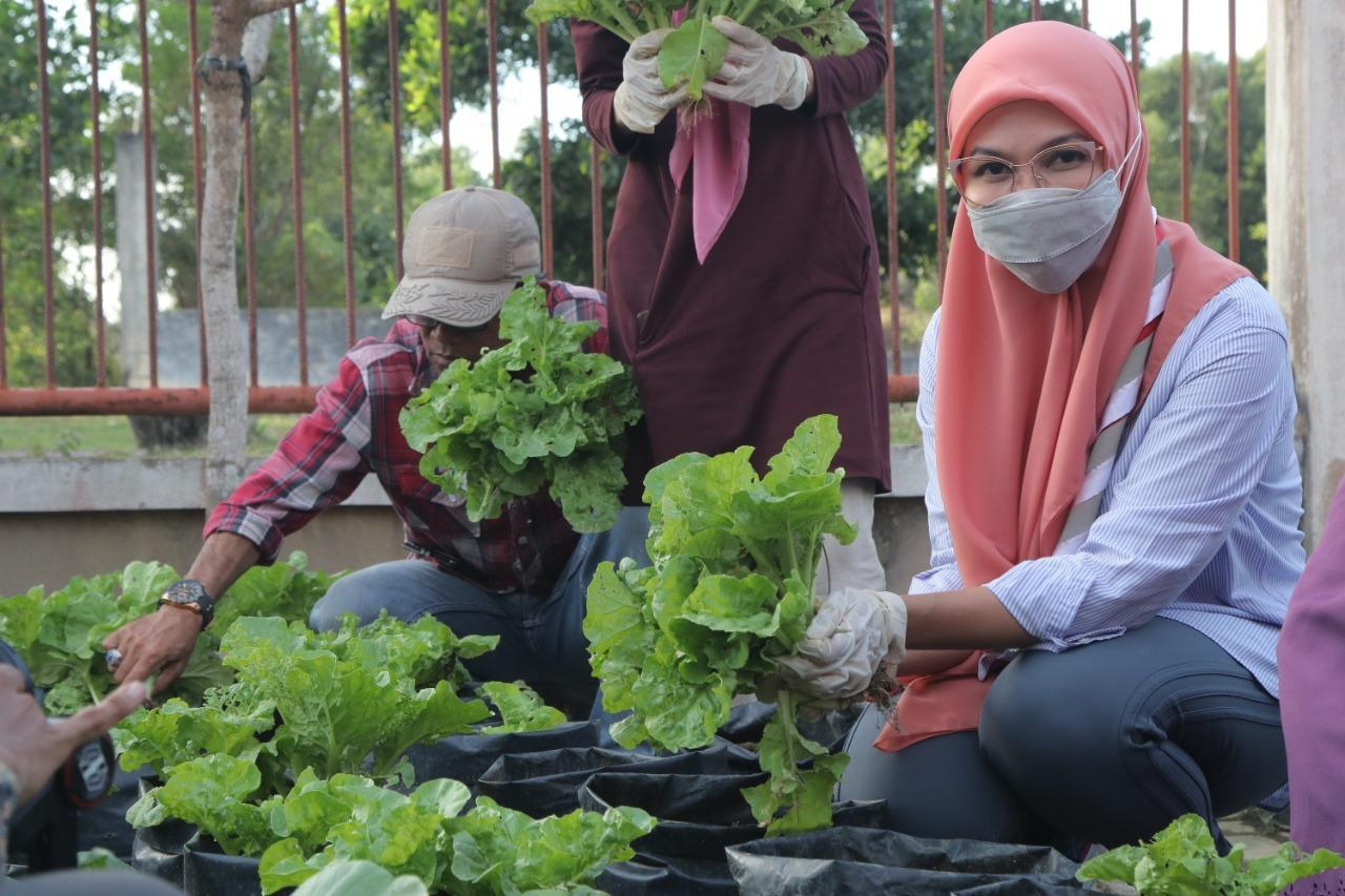 Pramuka Babel Panen Sayuran, Melati Erzaldi: Ternyata Menanam Itu Mudah