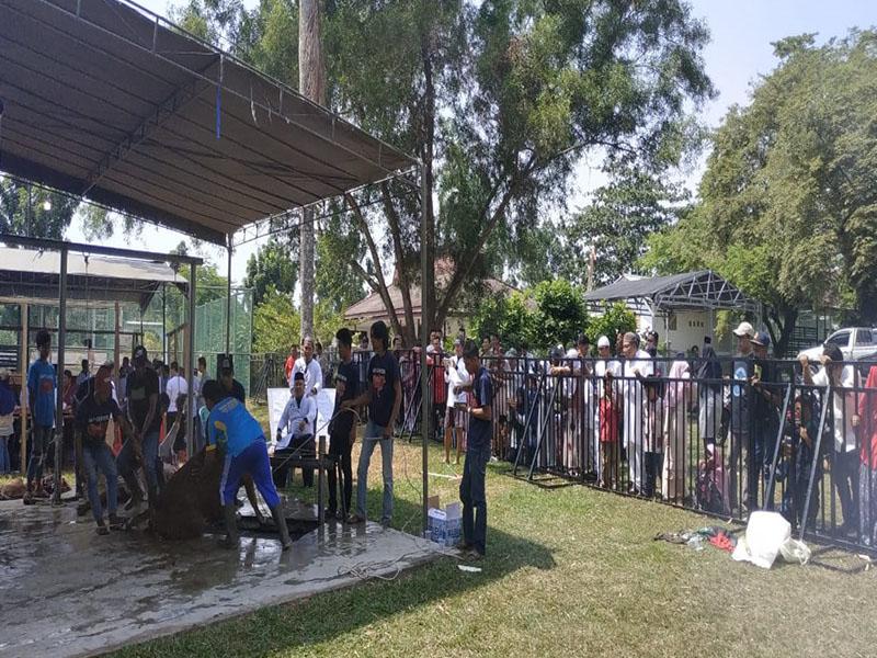 PT Timah Distribusikan Daging Kurban ke Desa-Desa dan Pesantren