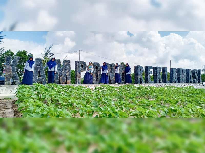 Reklamasi Lahan Eks Tambang di Selinsing, PT Timah Sulap Jadi Agrowisata
