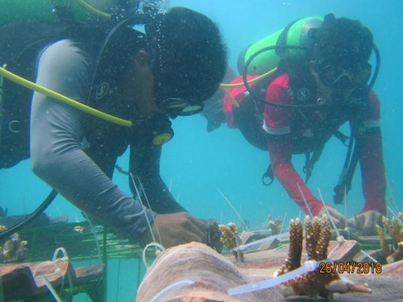 Rumah Ikan Buatan PT Timah Mulai Diserbu Ikan