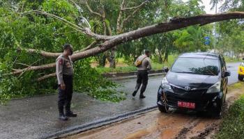 Ada Pohon Tumbang, Satsabhara Polres Basel Bantu Pengendara Melintas