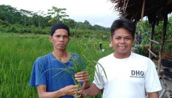 Aneh Bin Ajaib, Padi Ditanam Petani Desa Gudang Ini Berbuah Rumput