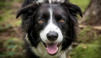 Apakah Memelihara Anjing baik untuk kesehatan mu ?