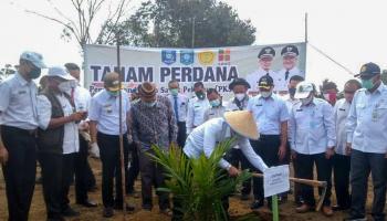 Bangka Tengah Jadi yang Pertama Target Replanting Sawit 500 Hektar