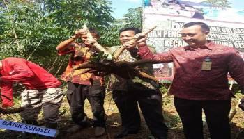Bank Sumsel Babel Siap Bantu Petani Singkong di Bangka