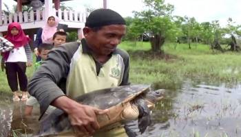 Belasan Ekor Hewan Langka Dilepasliarkan ke Habitatnya, Ada Kura-kura Berusia 30 Tahun