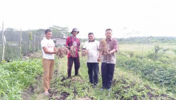 Berkat Bantuan APBDes, Petani Bawang Desa Namang Gelar Panen Perdana