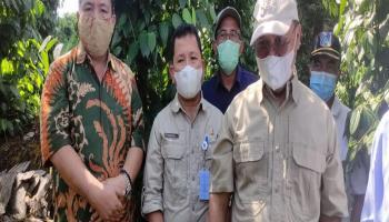 Buah Sawit Dora Tak Laku Lagi, Pemprov Babel Beri Program Bantuan Bibit untuk Replanting