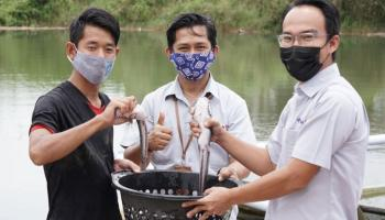 Budidaya Ikan Tawar di Lahan Bekas Tambang, Pesantren Ibnu Sabil Panen Ikan Lele