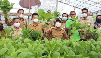 Bupati Bangka Panen Sayur di Kebun Hidroponik Bangka Setara