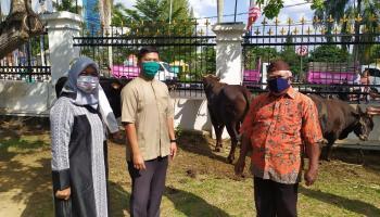 Dapat Bantuan Satu Sapi, Ustadz Kholil Berdoa Walikota Sukses Jalani Amanah