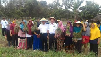 Dengar Arahan Bupati, Gapoktan Desa Melabun Panen Bawang 15 Ton per Hektare