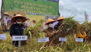 Desa Banyuasin Buat Bangga Bupati Bangka, Mulkan: Padi Sawah Kebanggaan Masyarakat