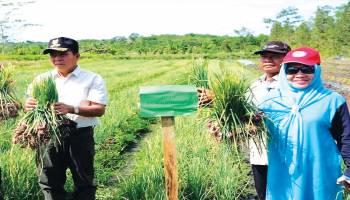 Desa Namang Siap Jadi Kampung Pangan Halal