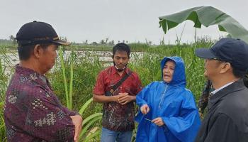 Di Bawah Guyuran Hujan, Rina Tarol Datangi Lahan Sawah di Desa Rias yang Terancam Gagal Panen