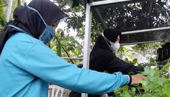 Didukung PT Timah, Hatinya PKK Kelurahan Sri Menanti Kembangkan Eco Village