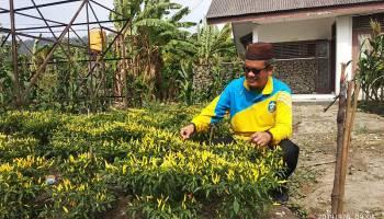 Dinas Pertanian Kabupaten Bangka Tanam Jagung dan Cabai di Lahan Kritis