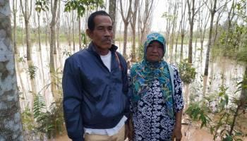 Ditanam Selama 9 Tahun, Lansia Ini Pasrah Saat Kebun Karetnya Terendam Limbah Tambang