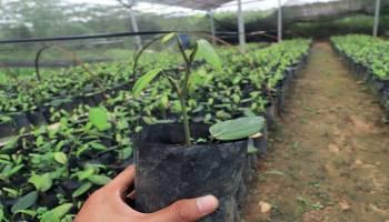 Dukung Program Resi Gudang Lada untuk Kesejahteraan Petani