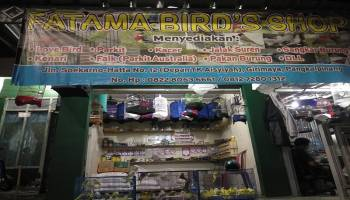 Fatama Birds Shop Berikan Diskon untuk Semua Jenis Lovebird