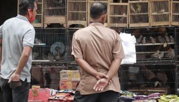 FOTO Mengintip Hiruk Pikuk Pasar Burung Jalan Trem (Part 1)