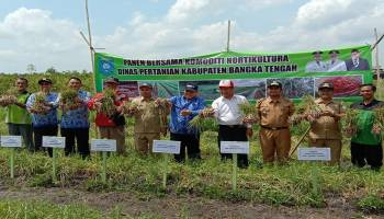 Gapoktan Bangka Tengah Berhasil Produksi Bawang Merah 9,79 Ton per Hektare