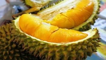 Gila Bener, Harga Durian Ini Capai Rp 14 Juta per Butir