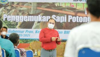 Gubernur Erzaldi Dorong Pengembangbiakan Sapi Melalui Kerjasama dengan Off Taker