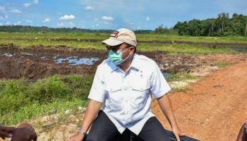 Gubernur Erzaldi Langsung Telusuri Penyebab Padi Keracunan di Sawah Batu Betumpang