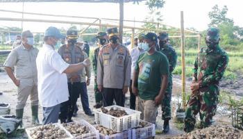 Gubernur Erzaldi Tinjau Budidayakan Jahe Gajah dengan Pupuk Alami di Beltim
