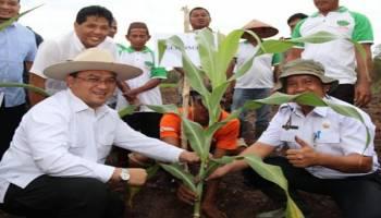 Gubernur Tanam Sorghum Organik di Kawasan Perkebunan Air Anyir
