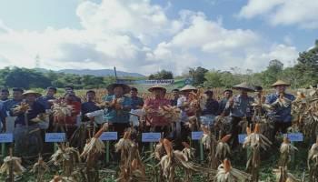Hadiri Panen Jagung di SMPN 3 Simpang Katis, Bupati Ingin Bentuk Petani Modern