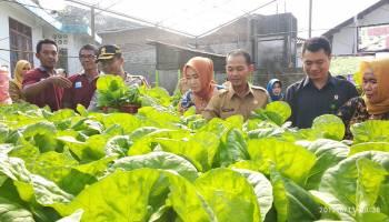 Hadiri Panen Perdana, Bupati Harap Masyarakat Budidayakan Tanaman Hidroponik