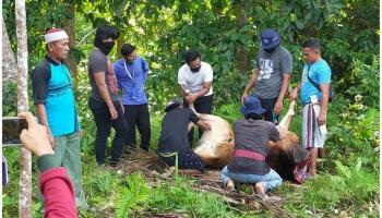 Hari Raya Idul Adha, KKN UBB Desa Riding Panjang Bantu Panitia kurban Dusun Mengkubung