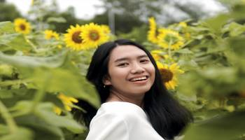 Hipnotis Bunga Matahari di Tanah Reklamasi
