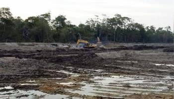 Hutan Mangrove Dikorbankan Untuk Tambak Udang, Pegiat Lingkungan Minta Aparat Bertindak