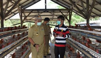 Jaga Ketahanan Pangan di Babel, Gubernur Erzaldi Kunjungi Usaha Peternakan Ayam