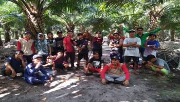Kecewa Terhadap Pengurus, Pemuda Karang Taruna Arung Dalam Panen Sawit Sendiri