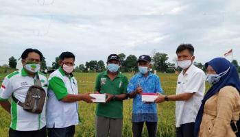 Kepala Dinas Pertanian dan Pangan Bangka Bersama Pengurus HKTI Kunjungi Persawahan di Lahan Eks Tambang